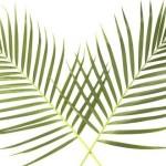 palm-600x330